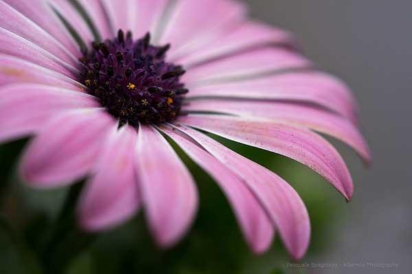 001 50 замечательных цветов - фото картинки