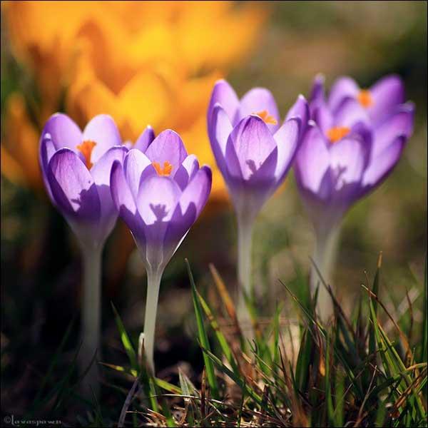 0014 50 замечательных цветов - фото картинки