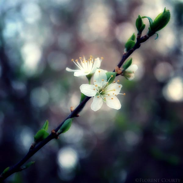 0015 50 замечательных цветов - фото картинки