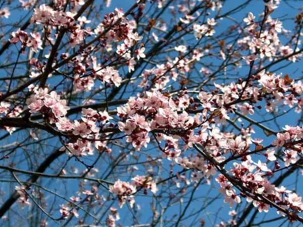 0017 50 замечательных цветов - фото картинки
