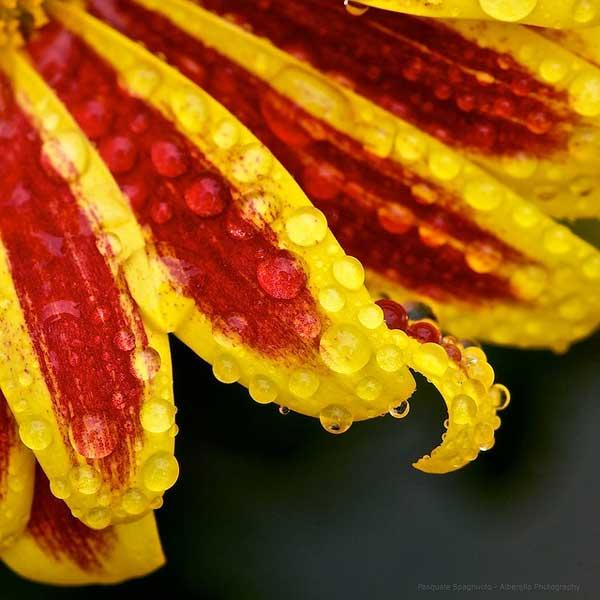 0018 50 замечательных цветов - фото картинки