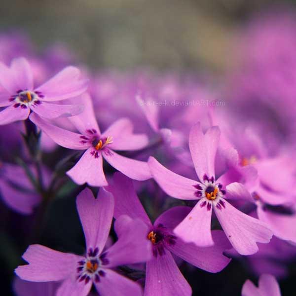 002 50 замечательных цветов - фото картинки