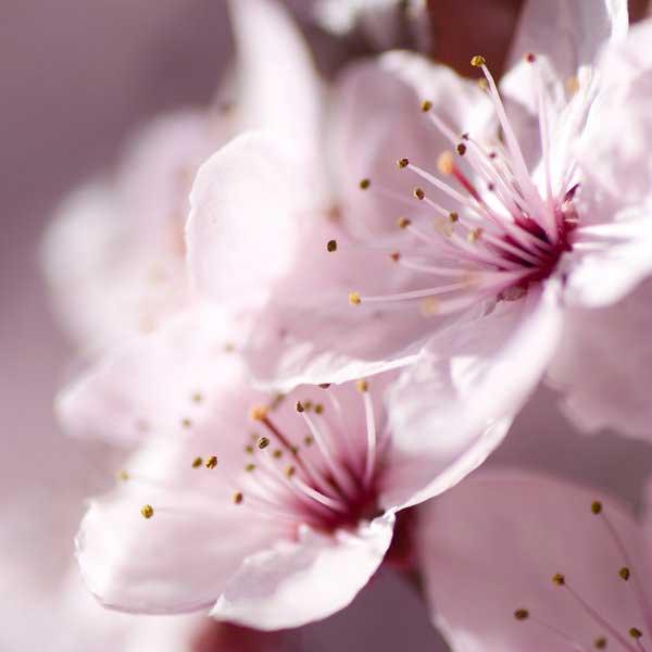 0020 50 замечательных цветов - фото картинки