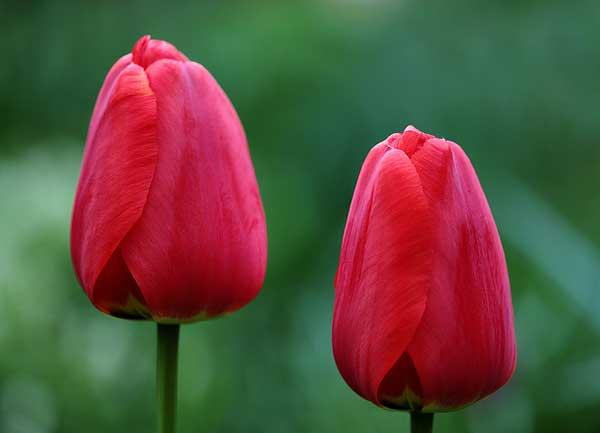 0021 50 замечательных цветов - фото картинки