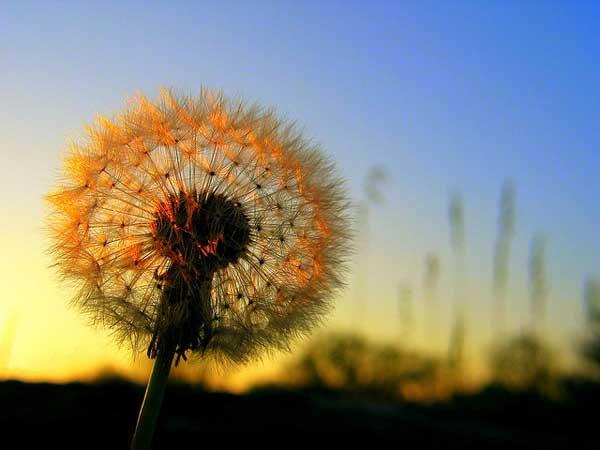0022 50 замечательных цветов - фото картинки