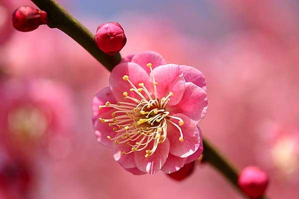 0025 50 замечательных цветов - фото картинки