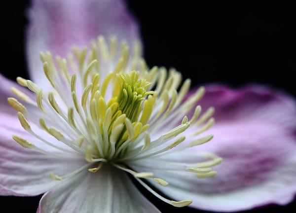 0026 50 замечательных цветов - фото картинки