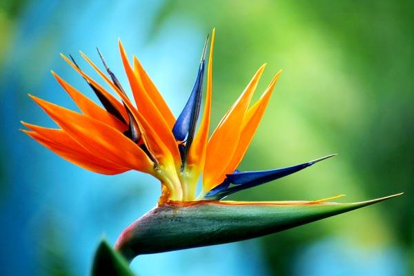 0027 50 замечательных цветов - фото картинки