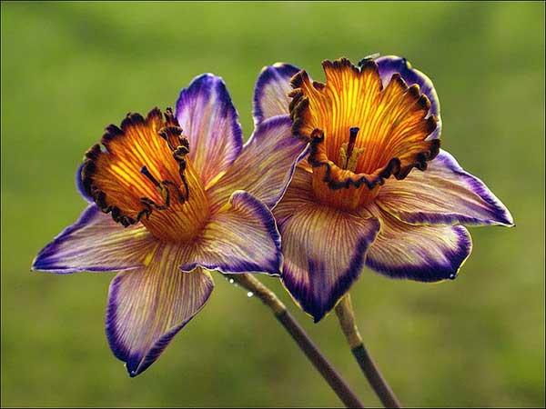 0031 50 замечательных цветов - фото картинки