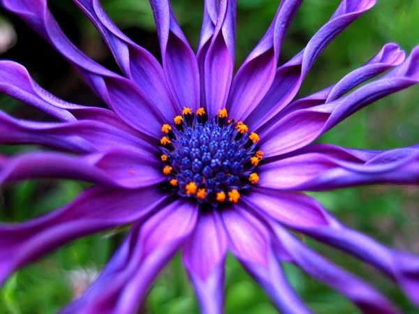 0032 50 замечательных цветов - фото картинки