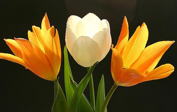 0035 50 замечательных цветов - фото картинки
