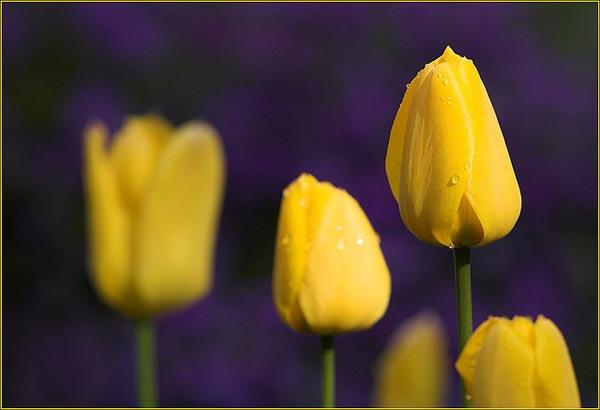 0038 50 замечательных цветов - фото картинки