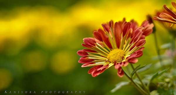 004 50 замечательных цветов - фото картинки