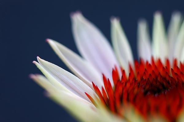 0040 50 замечательных цветов - фото картинки