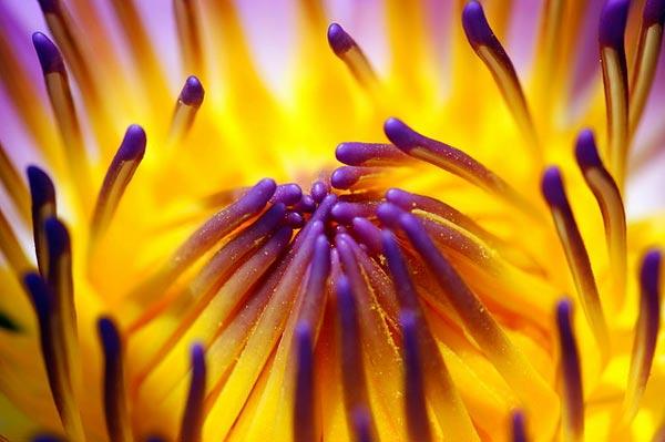 0041 50 замечательных цветов - фото картинки