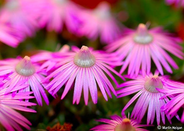 0043 50 замечательных цветов - фото картинки