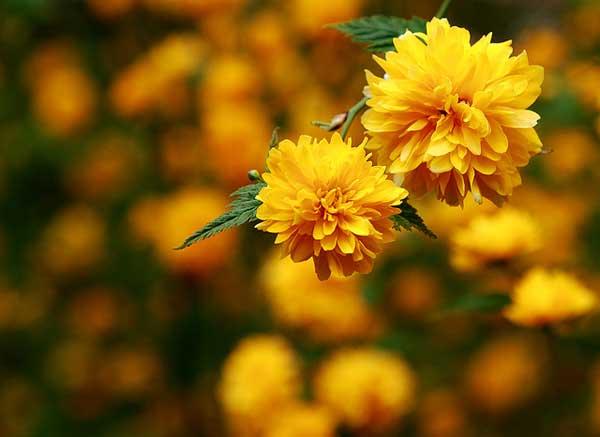 0045 50 замечательных цветов - фото картинки