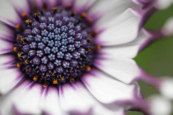005 50 замечательных цветов - фото картинки