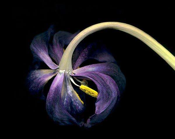 0050 50 замечательных цветов - фото картинки