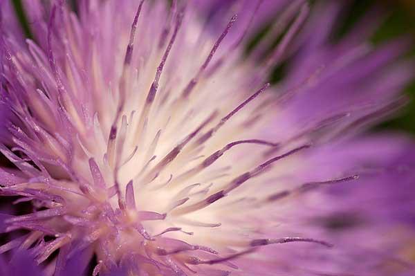 006 50 замечательных цветов - фото картинки