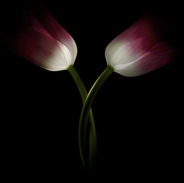 49 50 замечательных цветов - фото картинки