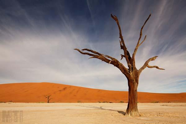 1 Красивые деревья - 28 фото