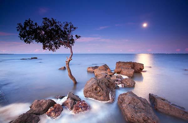 10 Красивые деревья - 28 фото