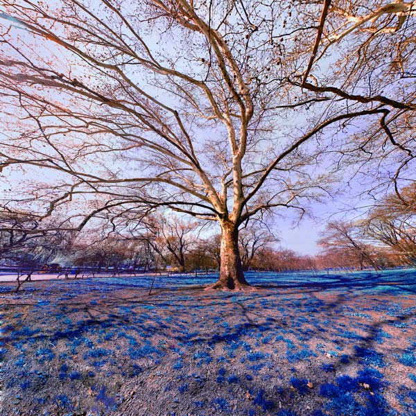 11 Красивые деревья - 28 фото