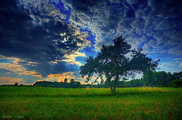 12 Красивые деревья - 28 фото