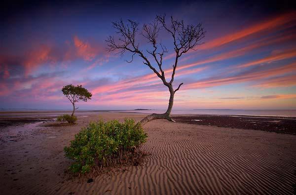 13 Красивые деревья - 28 фото