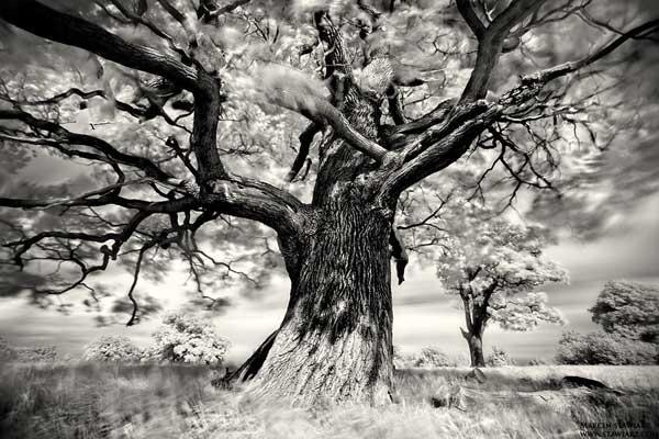 14 28 Beautiful Tree Images
