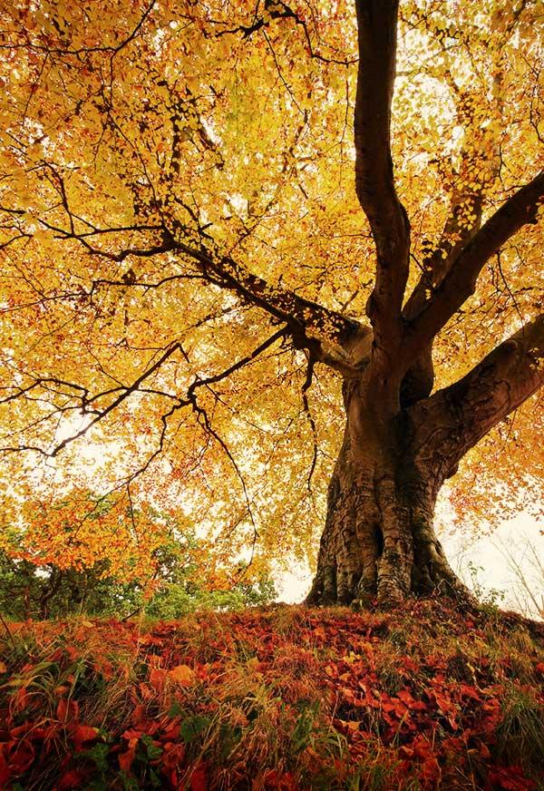 15 Красивые деревья - 28 фото