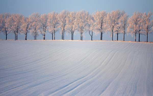16 Красивые деревья - 28 фото