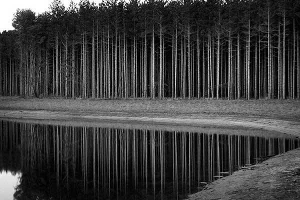 17 Красивые деревья - 28 фото