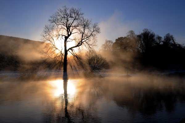 18 Красивые деревья - 28 фото