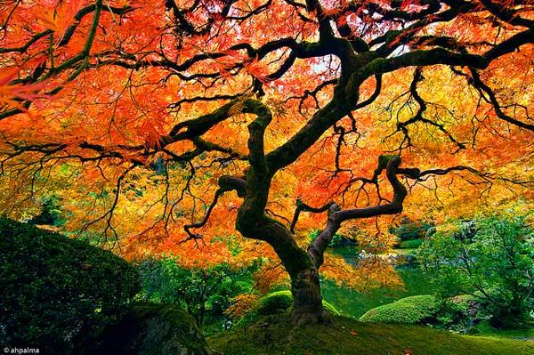 19 Красивые деревья - 28 фото