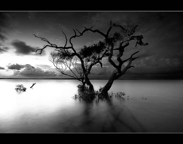 2 Красивые деревья - 28 фото