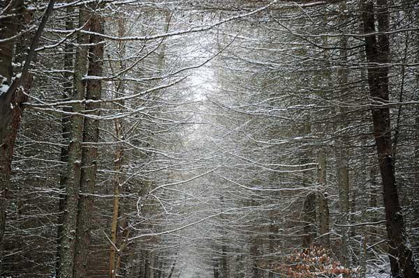 20 Красивые деревья - 28 фото