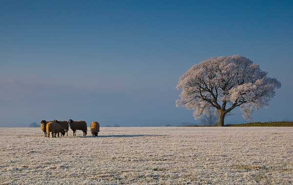 22 Красивые деревья - 28 фото