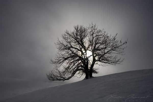 23 Красивые деревья - 28 фото