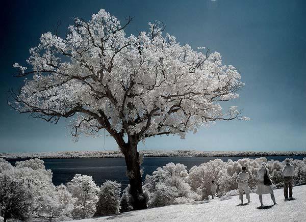 24 Красивые деревья - 28 фото
