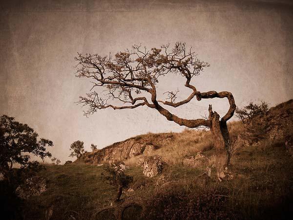 25 Красивые деревья - 28 фото