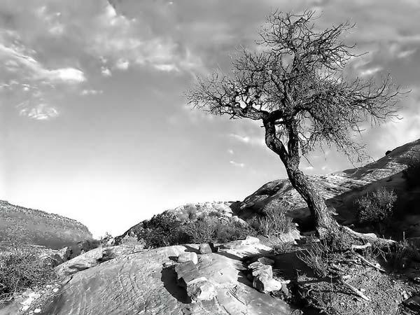 26 Красивые деревья - 28 фото