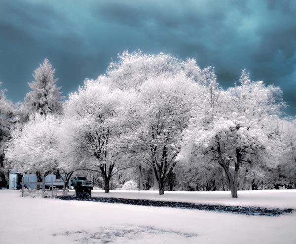 27 Красивые деревья - 28 фото