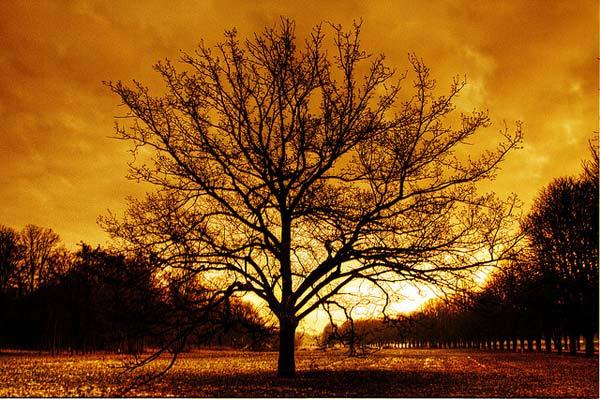 28 Красивые деревья - 28 фото