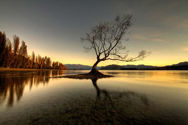 3 Красивые деревья - 28 фото