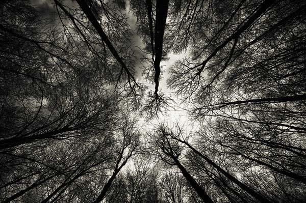 4 Красивые деревья - 28 фото