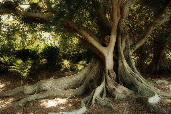 5 Красивые деревья - 28 фото