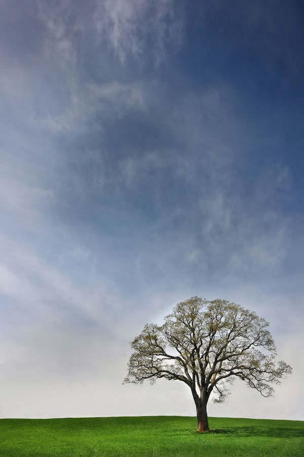 6 Красивые деревья - 28 фото