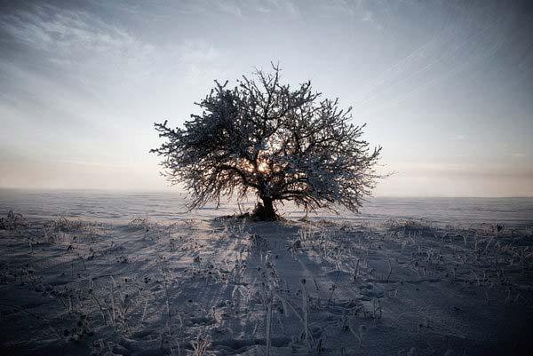 7 Красивые деревья - 28 фото